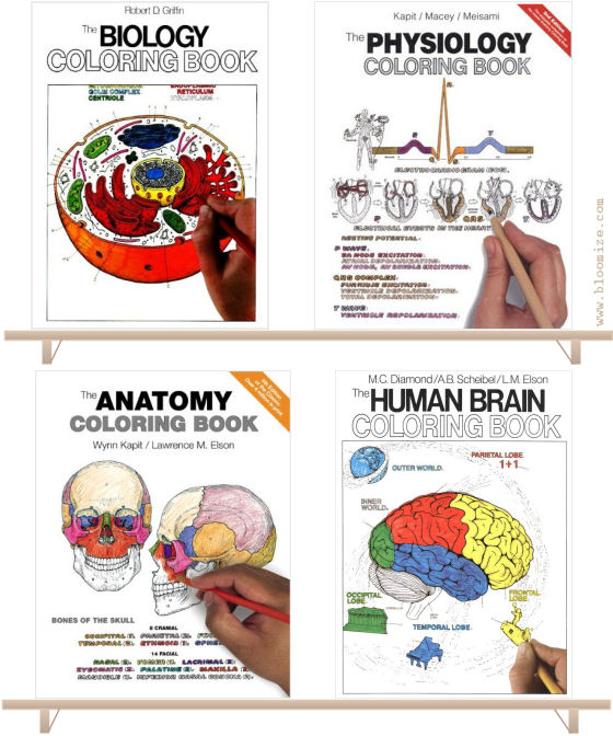left - Physiology Coloring Book